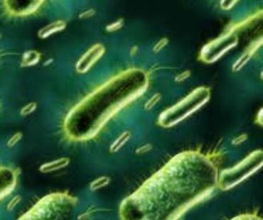 bacteria-remake2